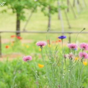 *そよ風と。。ちいさな花たちと。。(アーカイブより)♪