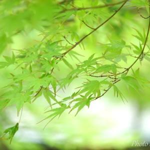 *彩~soft green 。。鎌倉 一条恵観山荘♪