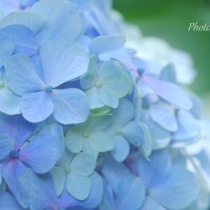 *緑陰のブルー。。♪