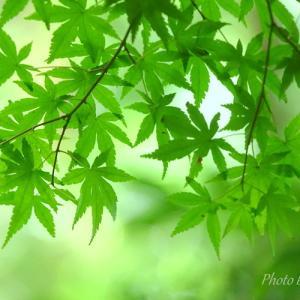 *癒しのgreen。。♪