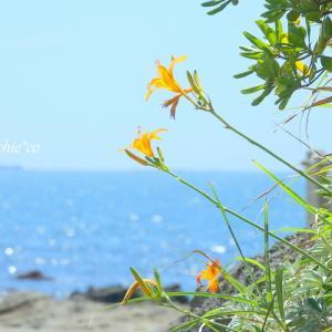 *夏いろ。。青い空と海とオレンジ色。。♪