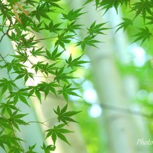 *緑の風景に癒されて。。~鎌倉 報国寺~♪