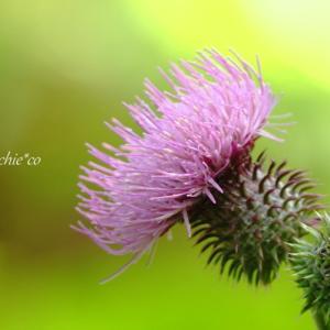 *しづやかな佇まい。。浅紫の花たち。。♪