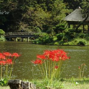 *赤彩に華やぐ風景。。~彼岸花咲く 横浜三渓園~2♪