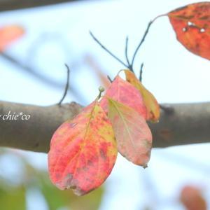 *お疲れさまの葉っぱたち。。♪