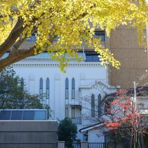 *ドレスアップした公孫樹(いちょう)の樹。。~横浜開港広場~♪