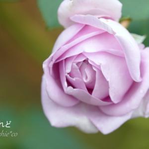 *blue を帯びた薔薇たち。。♪