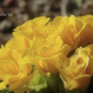 *黄色い花たち。。♪
