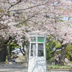 *桜さんぽ~。.港の見える丘公園~山手本通り~山手イタリア山庭園。。♪