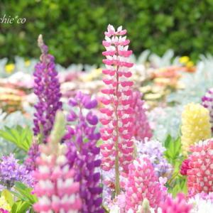 *4月の花彩。。~山手イタリア山庭園~♪