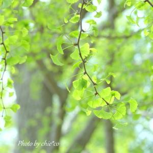 *fresh green。。横浜山手イタリア山庭園。。♪