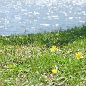 *光あふれる小さな野で。。♪