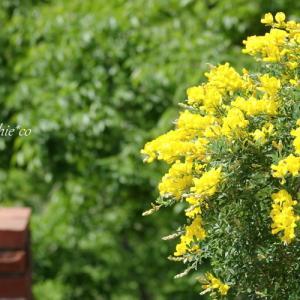 *天空のカフェ。。新緑の鎌倉 樹ガーデン。。♪