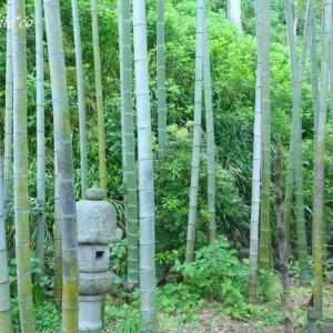 *若葉のころ。。鎌倉長谷寺。。♪