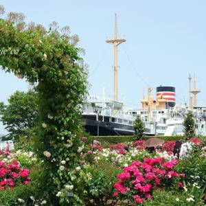 *薔薇の香りに包まれて。。~横浜山下公園~♪
