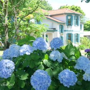 *紫陽花が彩る風景。。横浜 ブラフ18番館。。♪