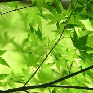 *すず風~。 summer green。。♪