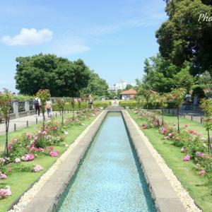 *爽やかな光と バラと。。~横浜山手イタリア山庭園~♪