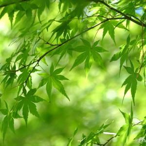 *癒しの緑。。♪