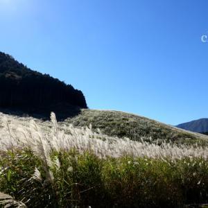 *シャンパンゴールドの風を。。~仙石原すすき草原~♪