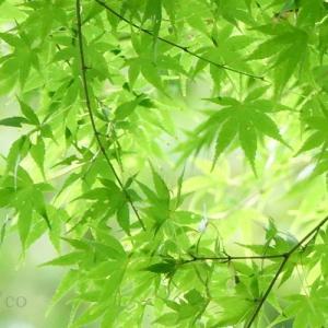 *優しいgreen。。♪