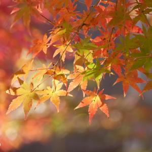 *追憶。。~彩のかがやき。。風雅なもみじたち。。~箱根美術館 庭園~♪