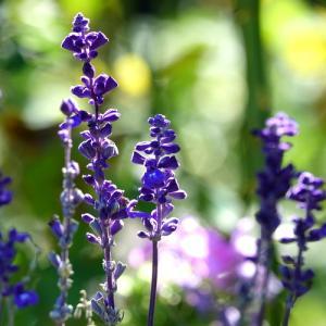 *花 彩。。深まる秋に。。~アカオハーブ&ローズガーデン~♪