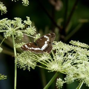 *ひそやかに咲く 白い花たち。。~箱根 お玉ヶ池のほとり~♪
