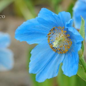 *野山を彩る 花の彩(いろ)。。
