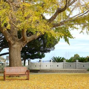 * warm yellow が彩るベンチ。。~横浜 山手イタリア山庭園~♪