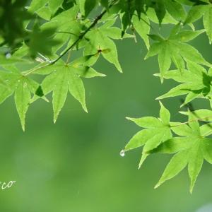 *潤う green。。♪
