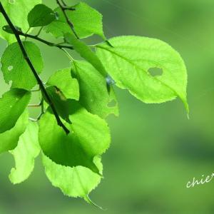 *和。。癒しの緑。。~鎌倉 浄妙寺~3♪