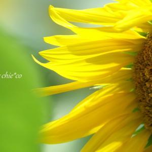 *ひまわり色の 夏笑み 。。♪