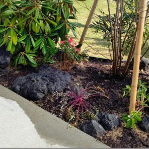 植栽と二現場のスキ土と激レアさん