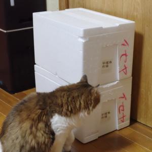 猫ハウスの大きさは?