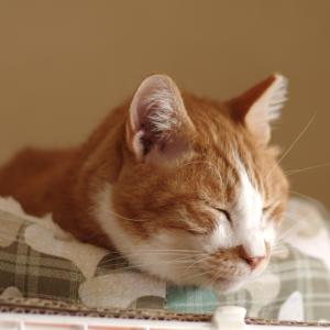 茶毛三郎くんにベッドをあげた結果・・・