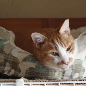 猫ベッドをいただきました♪