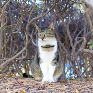 公園猫たちの昼の顔