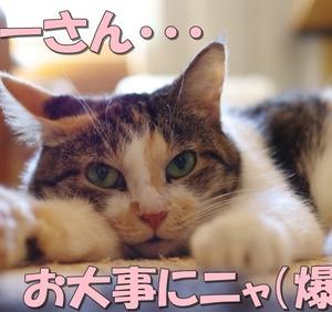 猫マーフィーの法則