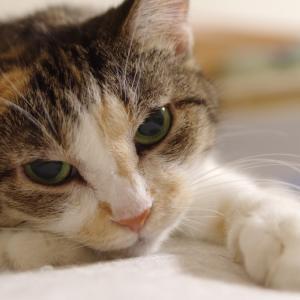 三毛猫ミーコと一緒っ