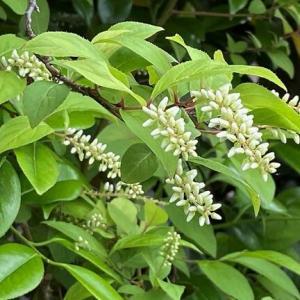 イブキトラノウやズイナが咲き始めて・・・