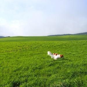 風の又三郎ゆかりの「種山高原」キャンプ場