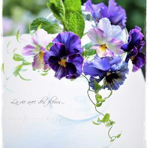 La vie avec des fleurs~花のある暮らし~パンジー&ビオラをクープに飾って