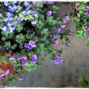 ちいさなベランダガーデン便り~小輪の花が大好き&憧れの花