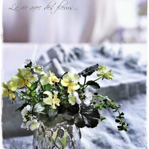 La vie avec des fleurs~花のある暮らし~レモンイエローのビオラ