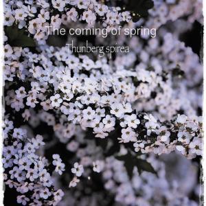花と暮らす~Instagramより~春を探しに