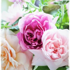 ちいさなベランダガーデン便り~GWに合わせてバラのシーズンが訪れました…