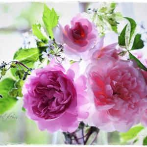 ちいさなベランダガーデン便り~ラブリーなバラたちを集めて