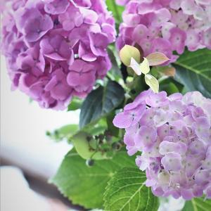 花のある暮らし~定番のアジサイを飾って