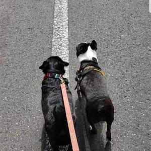 術後のお散歩。
